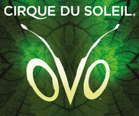Cirque du Soleil OVO - Circus Events - CircusTalk