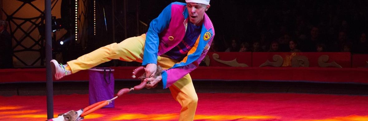 Garmon / гармошка /accordion - Circus Acts - CircusTalk