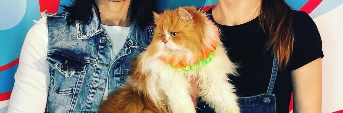 Savitsky Cats - Circus Acts - CircusTalk