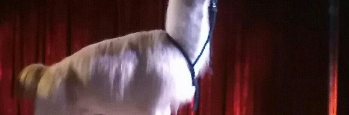 Liberty Llamas - Circus Acts - CircusTalk