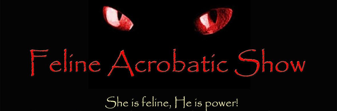 Feline Acrobatic Show - Circus Shows - CircusTalk