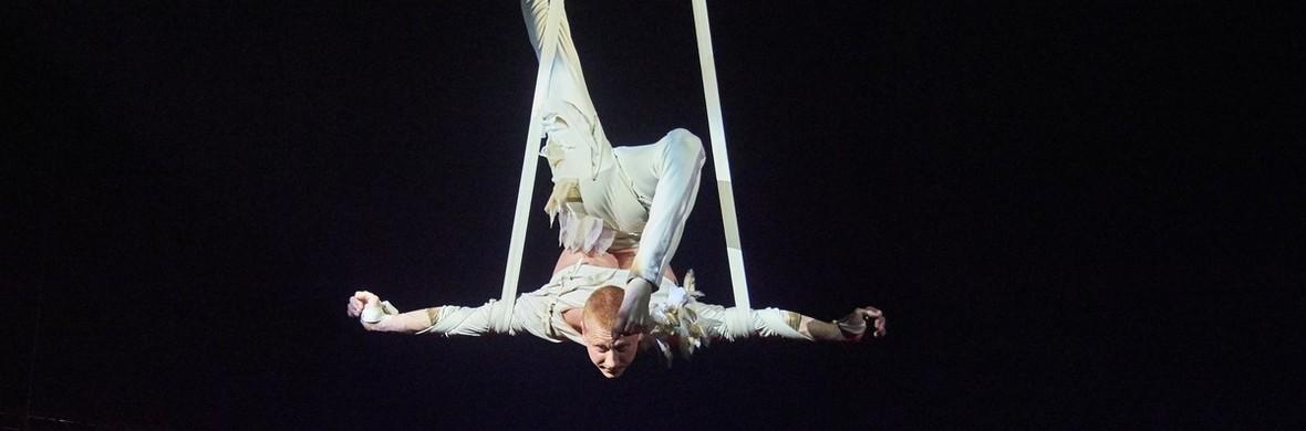 Angel of silence - Circus Acts - CircusTalk