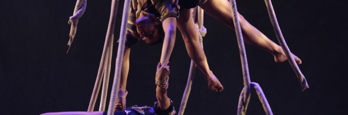Las Raíces Flojas - Circus Shows - CircusTalk