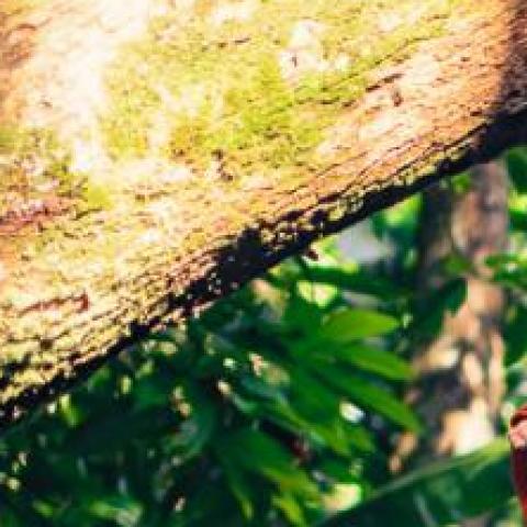 Hazel Pla - Individual - Costa Rica - CircusTalk
